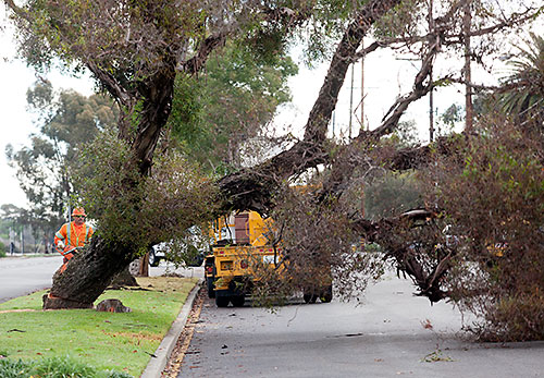 Trees Removed from Claremont Foothill Corridor